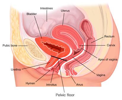 Urogynecology NYC Gynecologist Dr Anat Zelmanovich